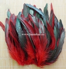 Feather pheasant, color: Red