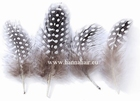 Feather chicken, color: Natural