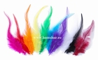 Feather pheasant, color: White